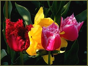 bloemen pps powerpoint